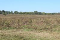 74 ACRES M/L - MOBERLY SECTION OF MADISON COUNTY - 21