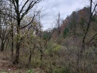 Approximately 98 Acres (Selling by boundary deed description) - 19